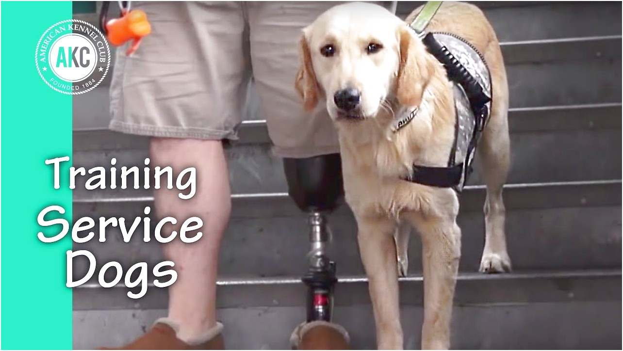 Service Dog Training Near Me