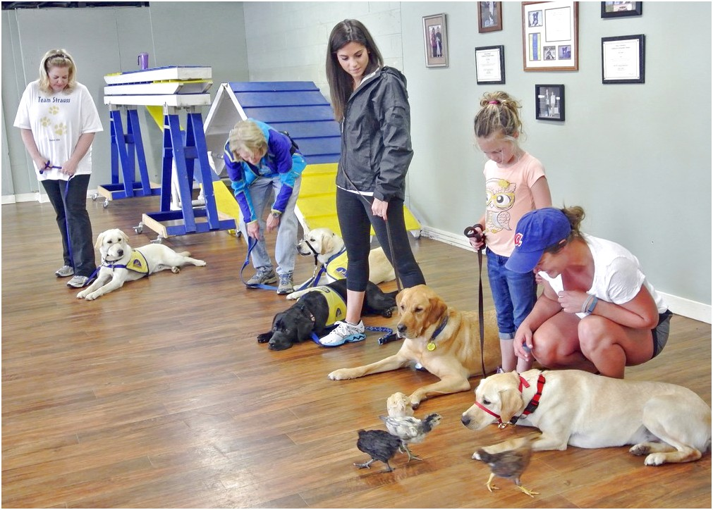 Service Dog Training Schools