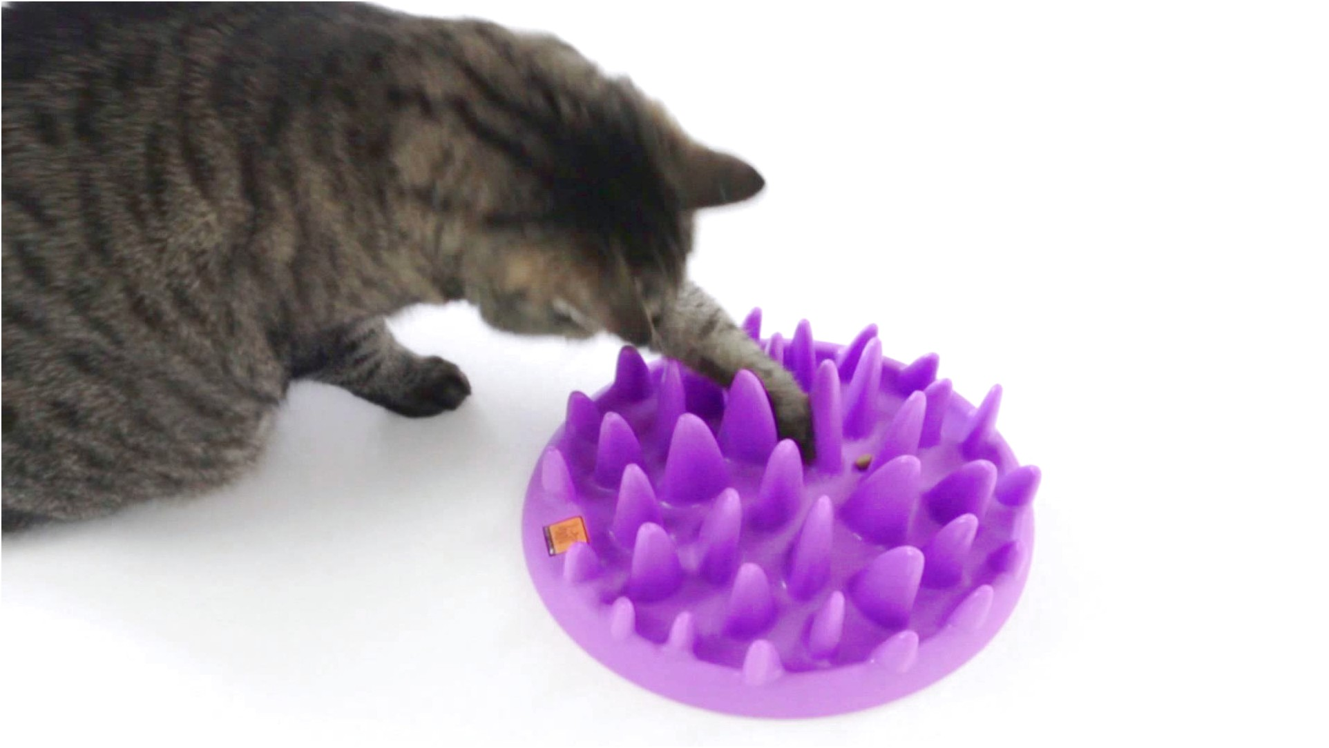 Slow Feed Bowl For Cats