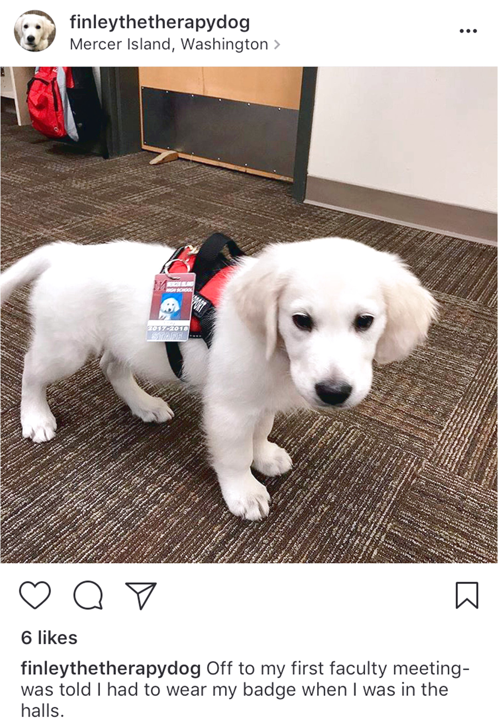 Therapy Dog In Training Vest