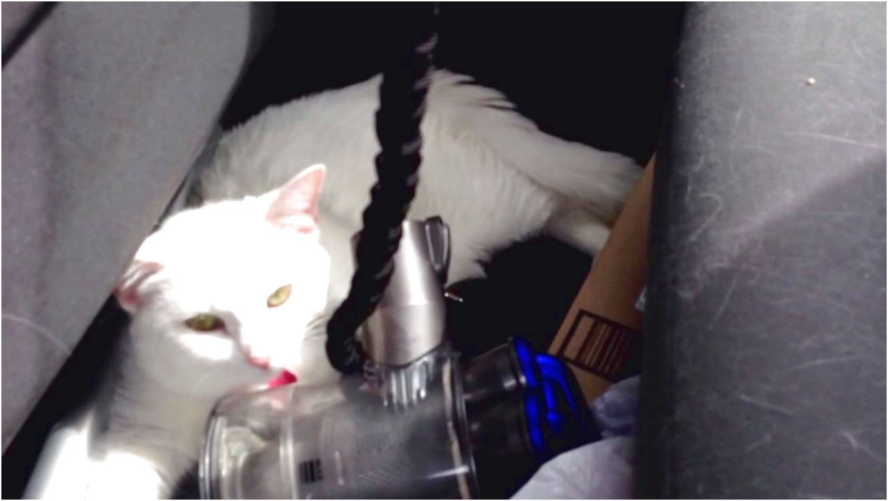 Traveling With Cats In Car
