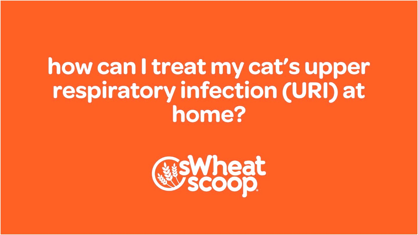 Upper Respiratory Infection In Cats Home Treatment