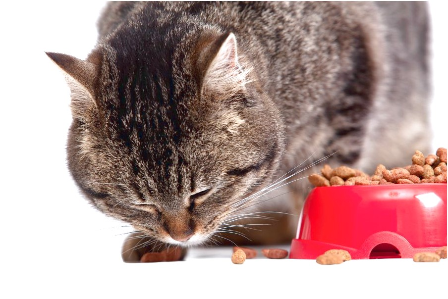Wet Or Dry Food For Cats