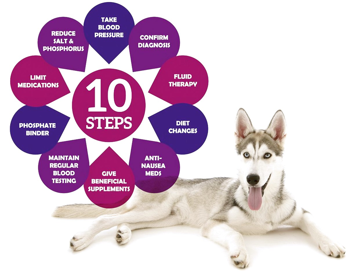 What Foods Should A Dog With Kidney Disease Eat