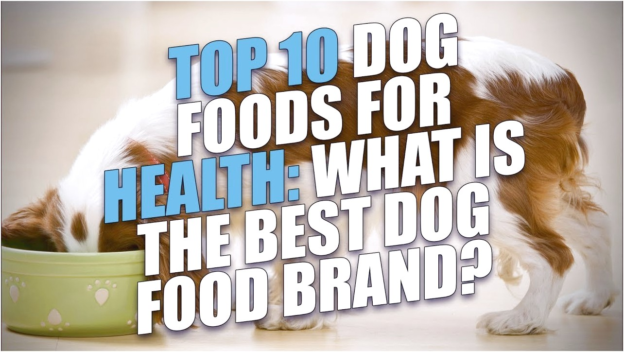 What Is The Best Dog Food On The Market
