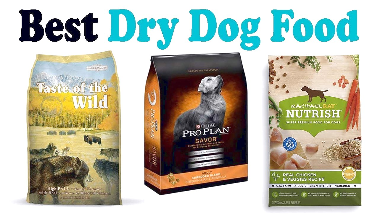 What Is The Best Dry Dog Food
