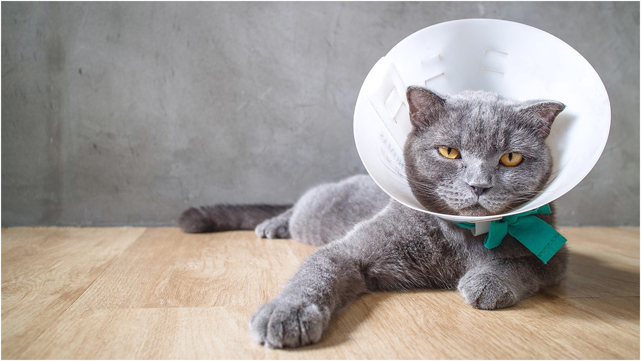 What To Put On A Cats Wound