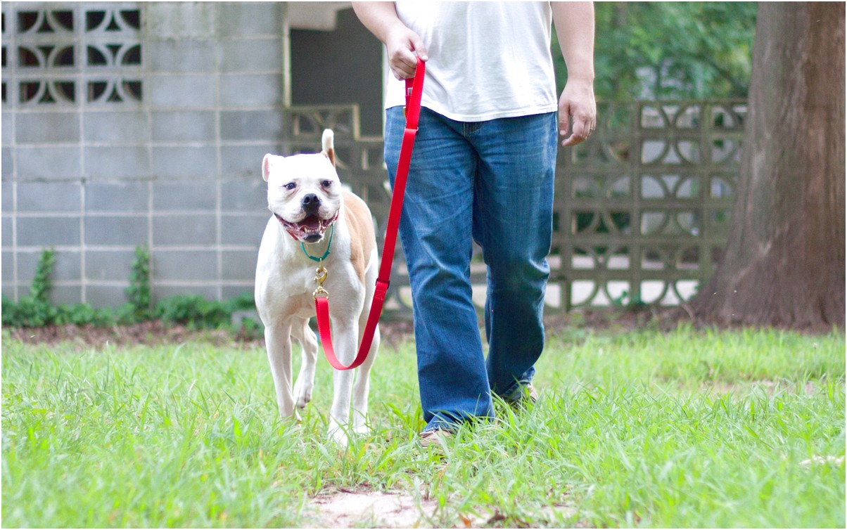 best dog training book for rescue dogs