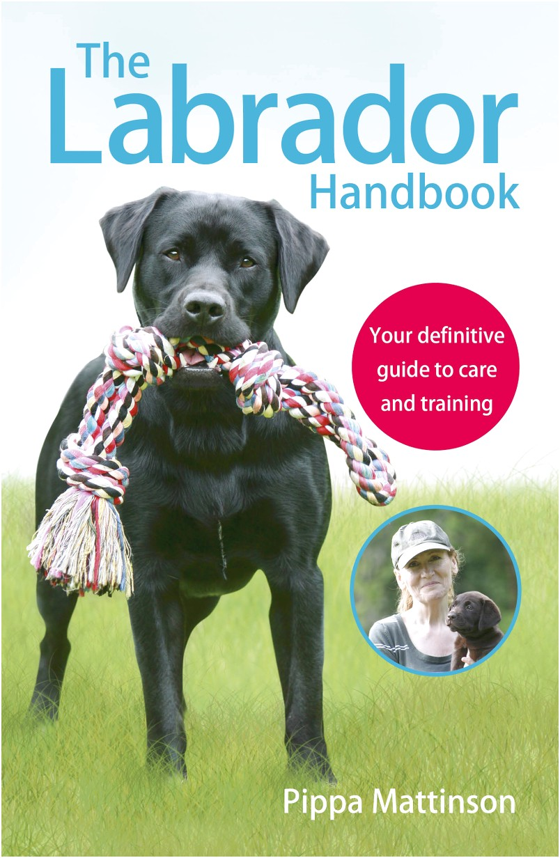 best duck dog training books