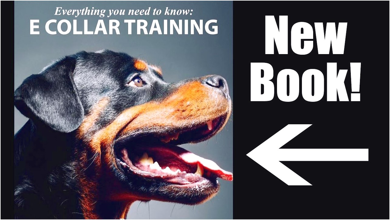 best e collar dog training book