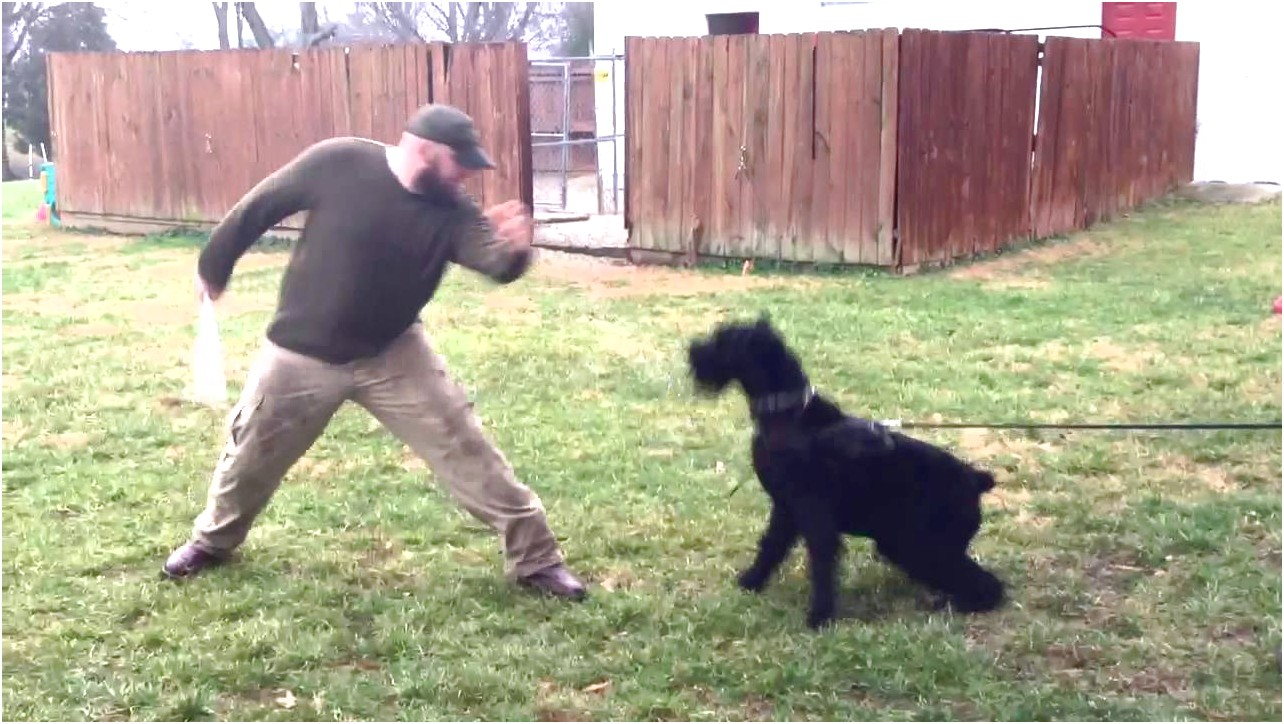 best personal protection dog trainers