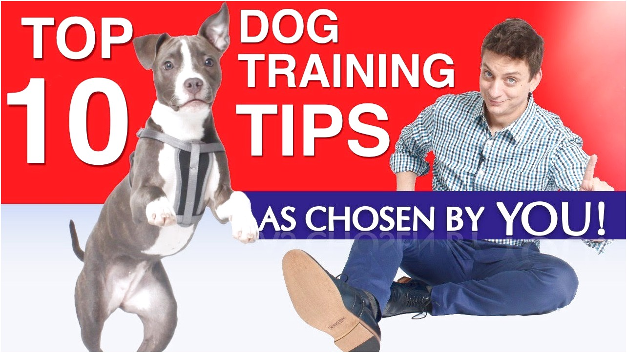 best rated dog training books