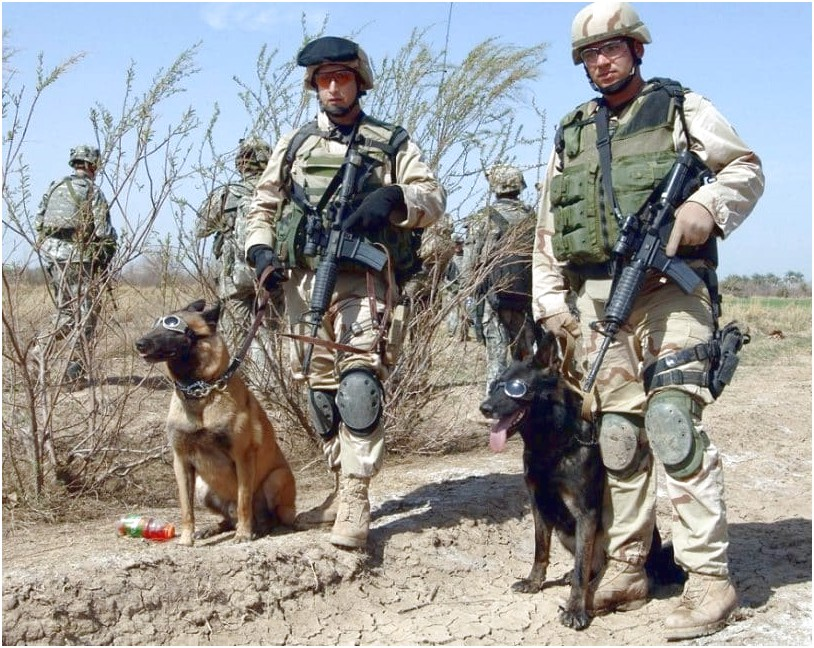 best trained military dogs