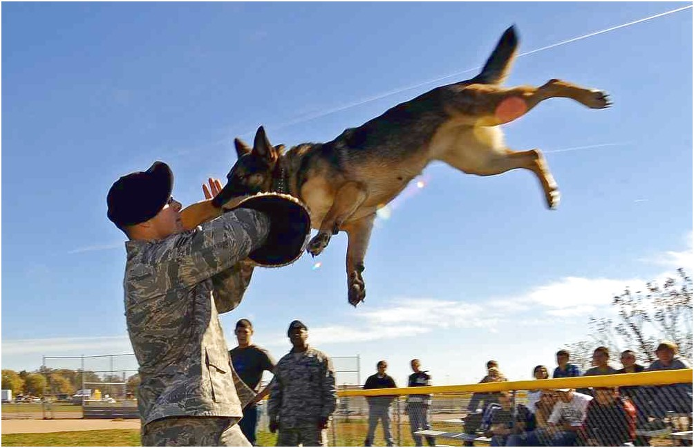 buy military trained dogs