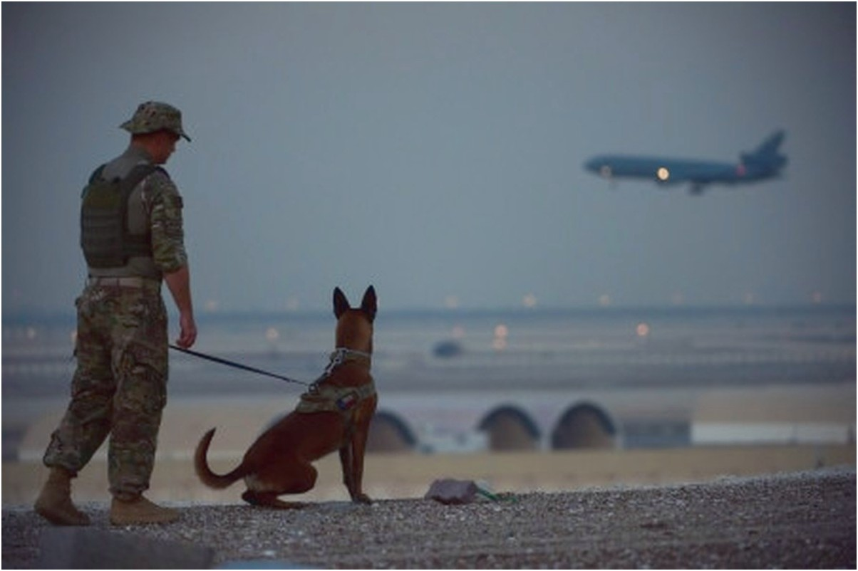can you buy military trained dogs