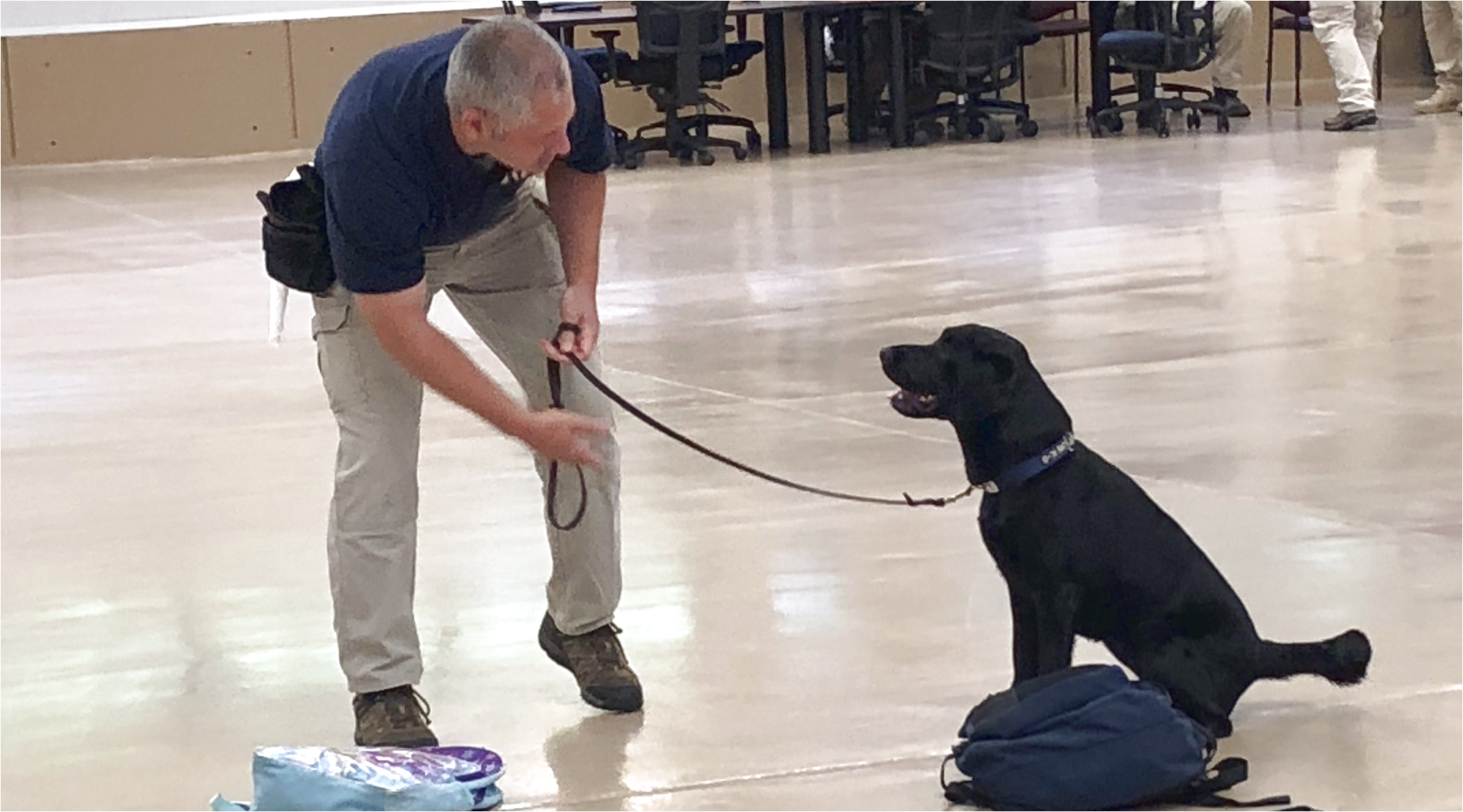 companion dog training boise