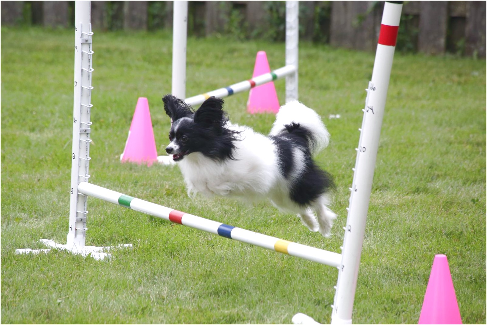 dog agility training classes near me