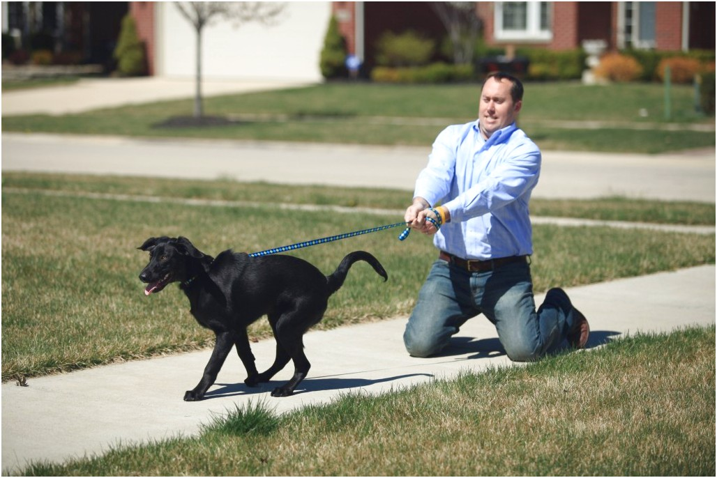 dog obedience training courses online