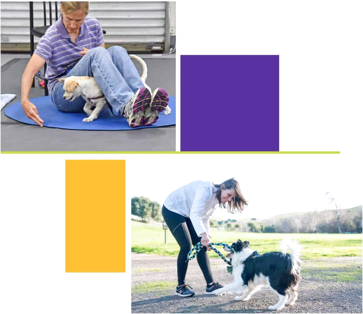 dog training certification classes near me