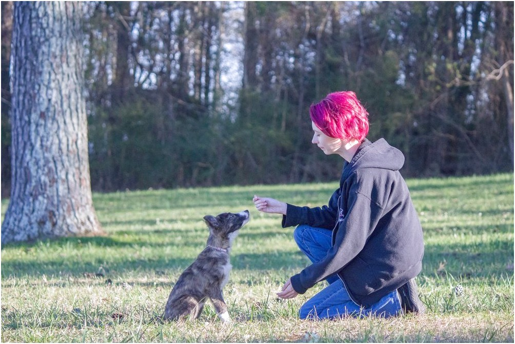 dog training classes near me prices