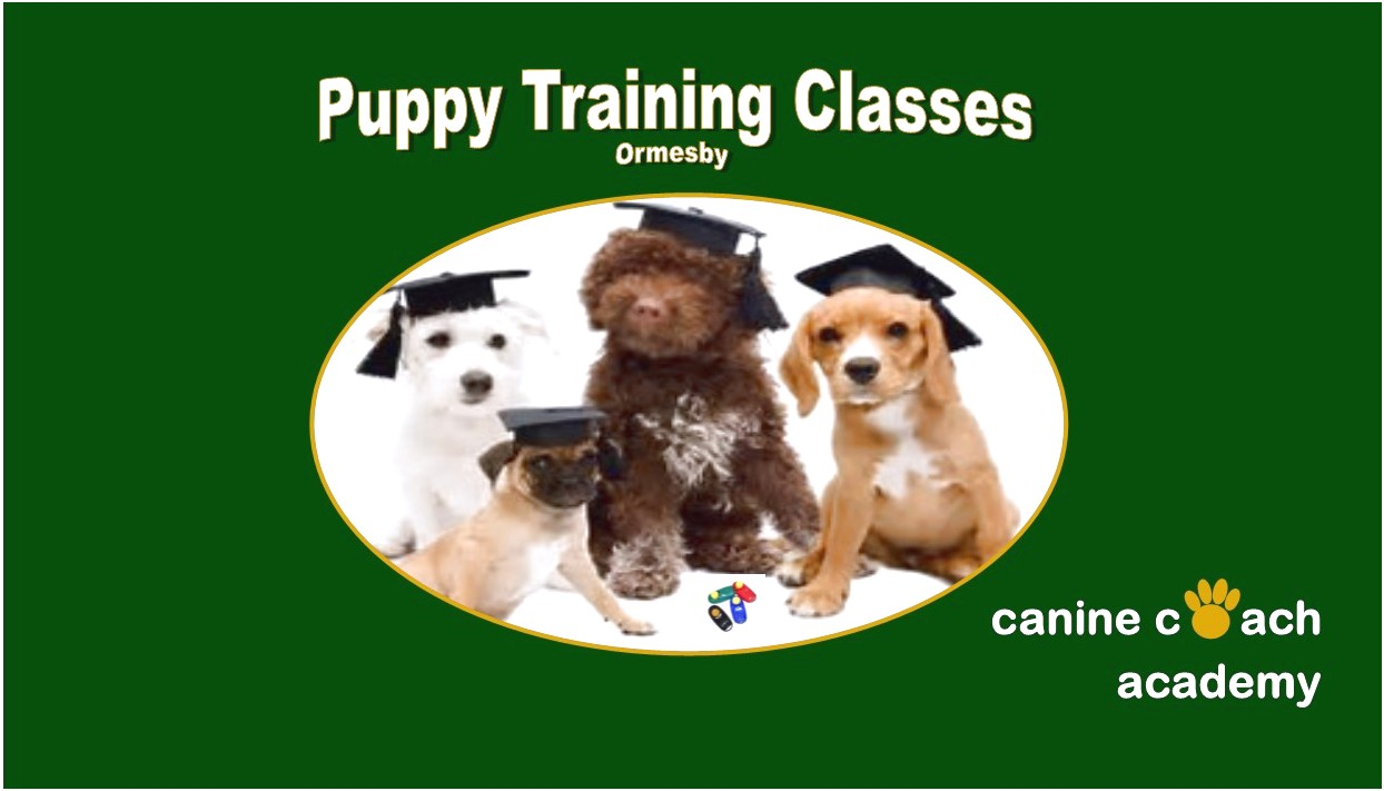 dog training classes near middlesbrough