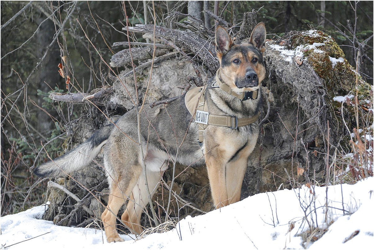how are military working dogs trained