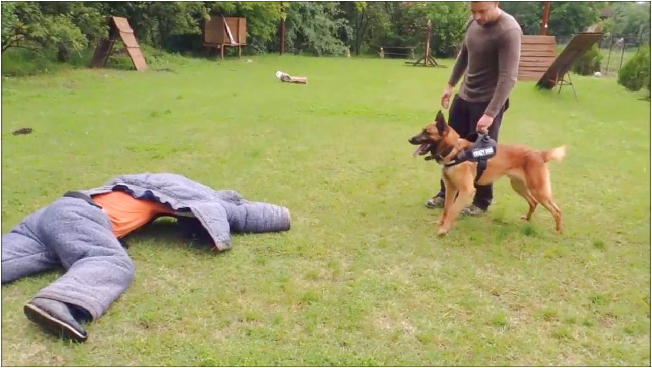 k9 dog training personal protection