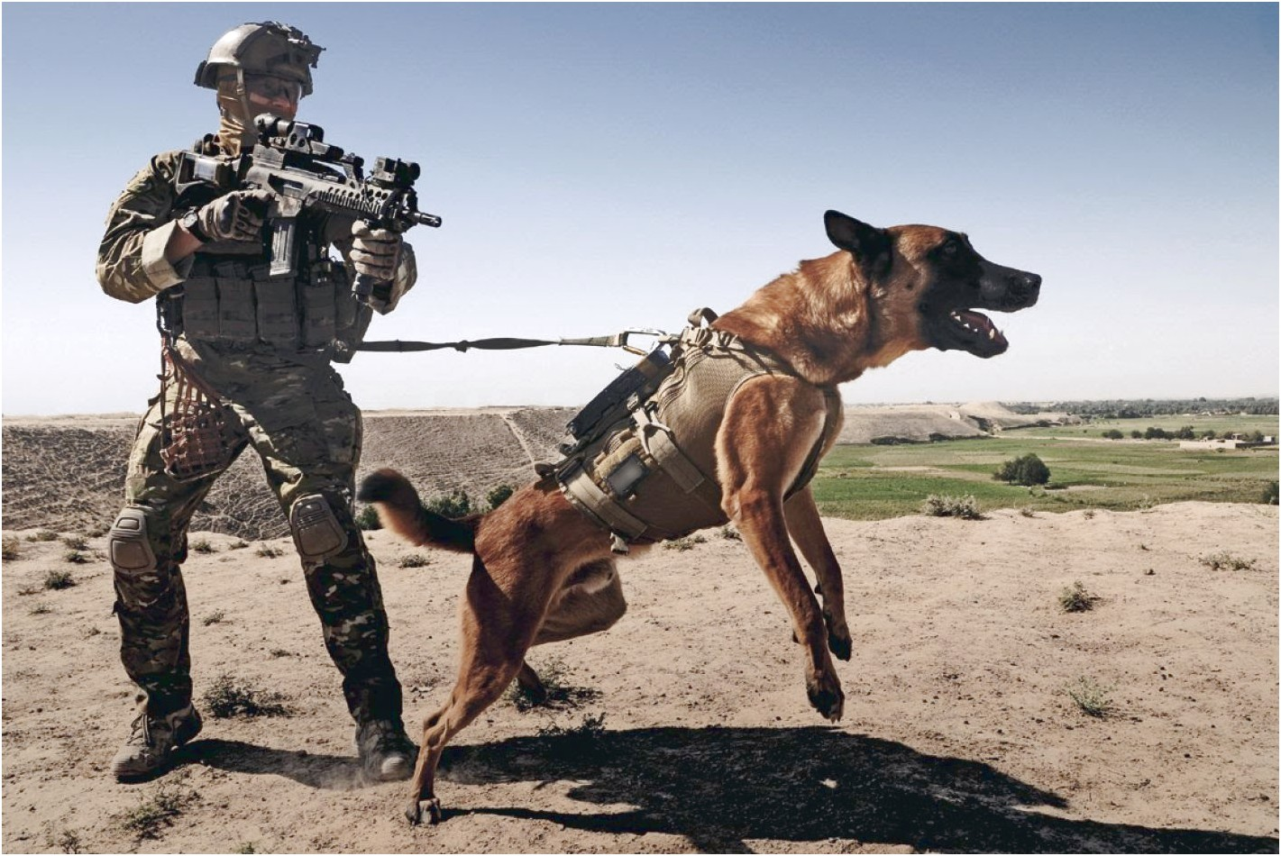 military dogs trained in dutch