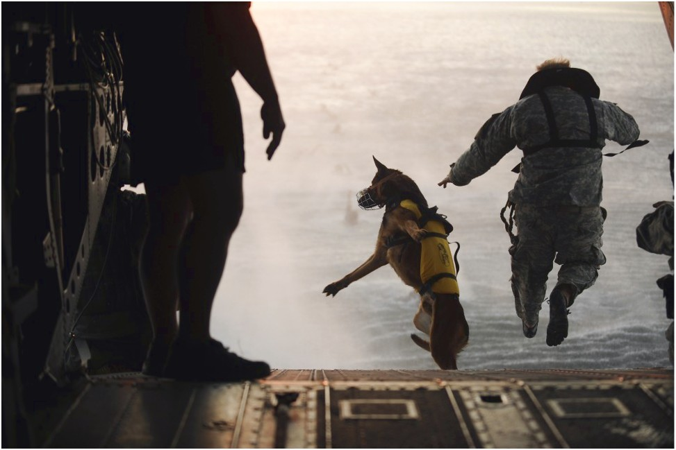 military dogs trained to kill