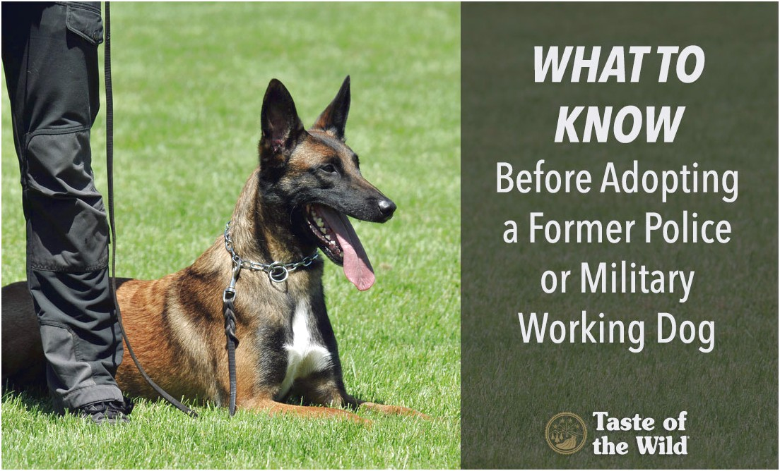 military trained dogs for adoption