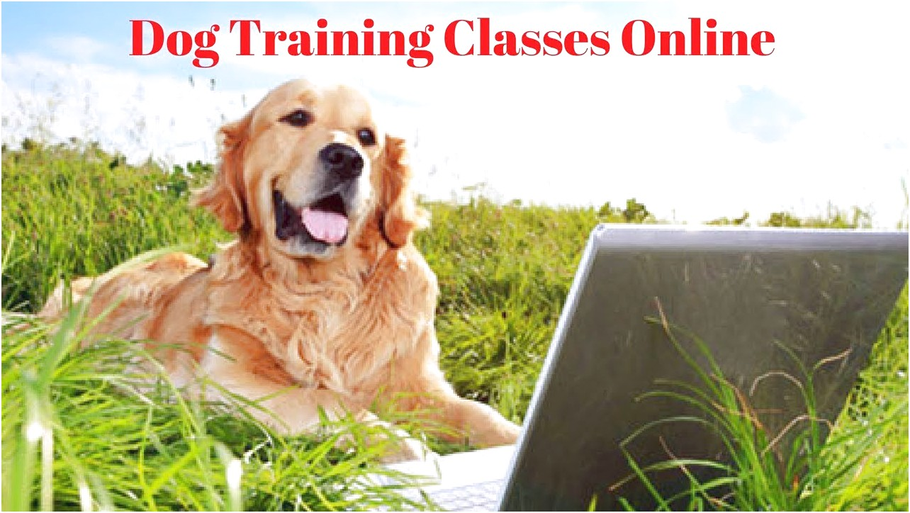 online courses for training a dog