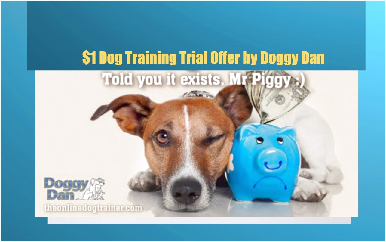 online dog trainer doggy dan