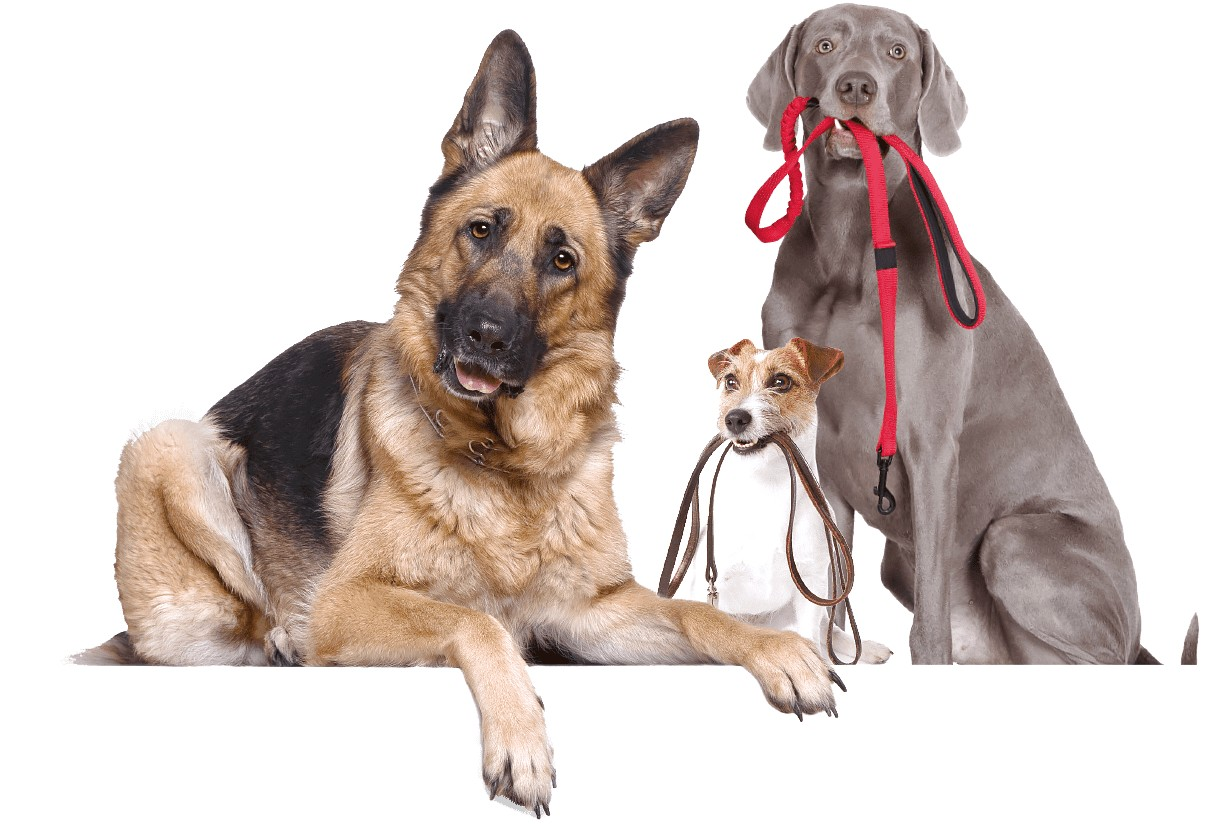 online dog training australia