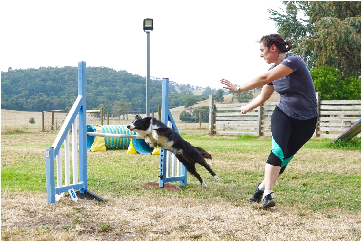 online dog training courses australia