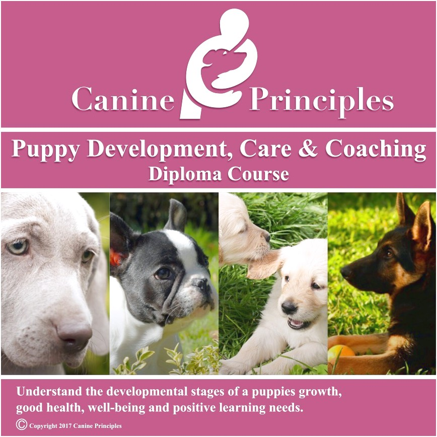 online dog training diploma