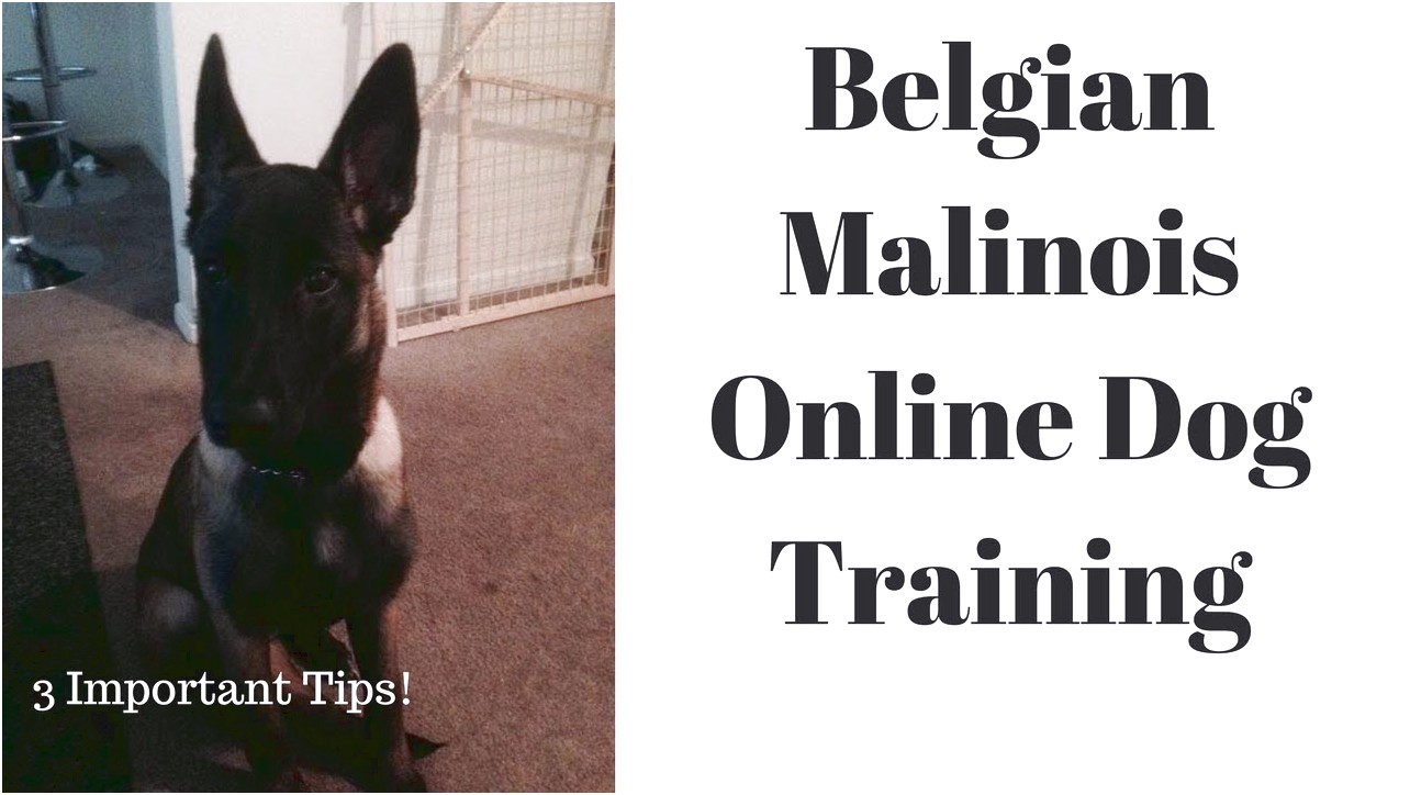 online dog training tips