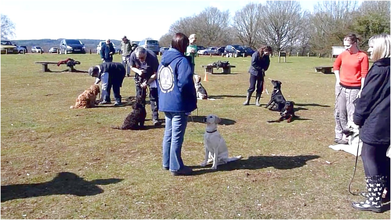 outdoor dog training classes near me