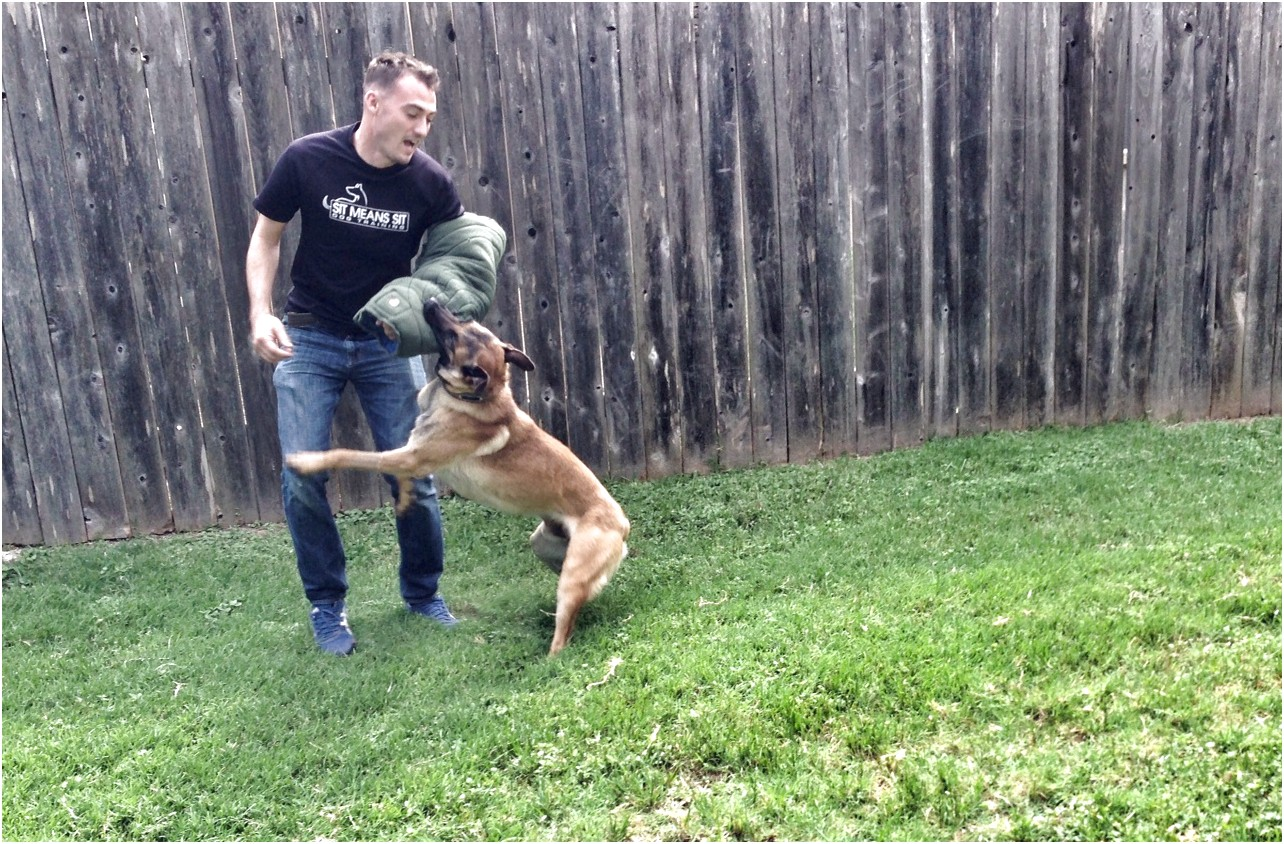 personal protection dog training austin tx