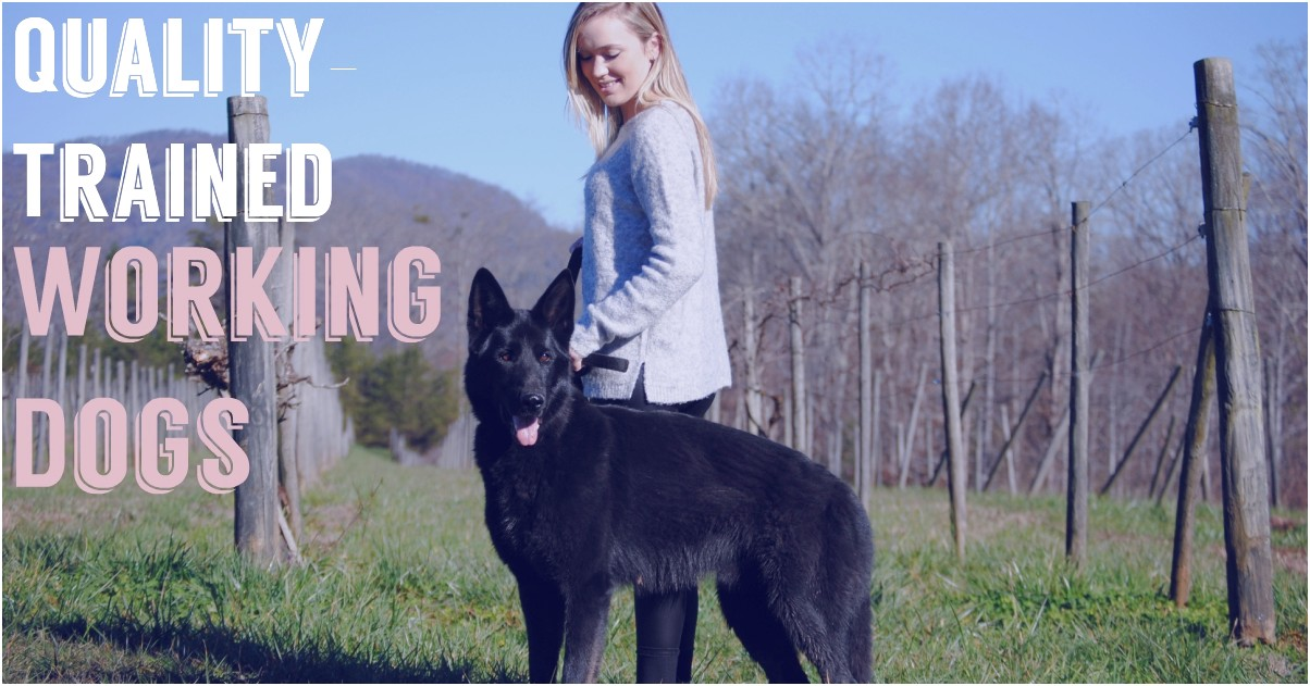 personal protection dog training greenville sc