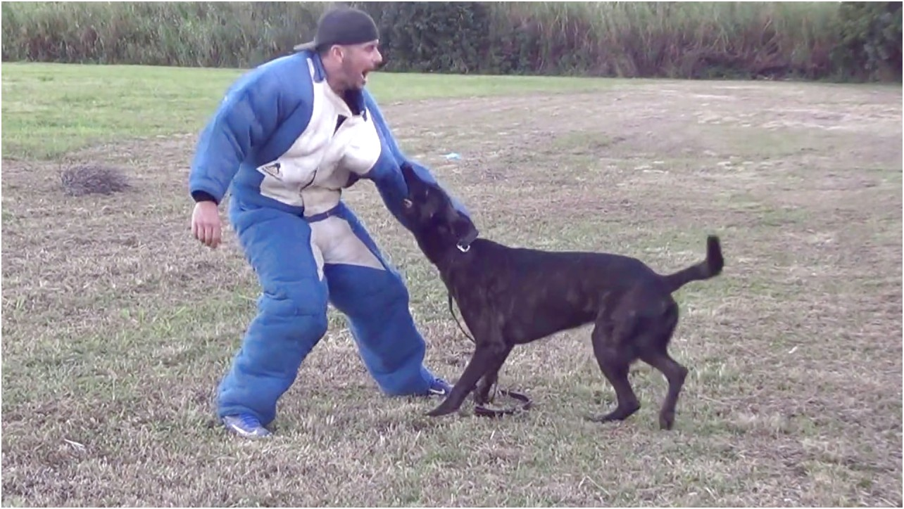 personal protection dog training in florida