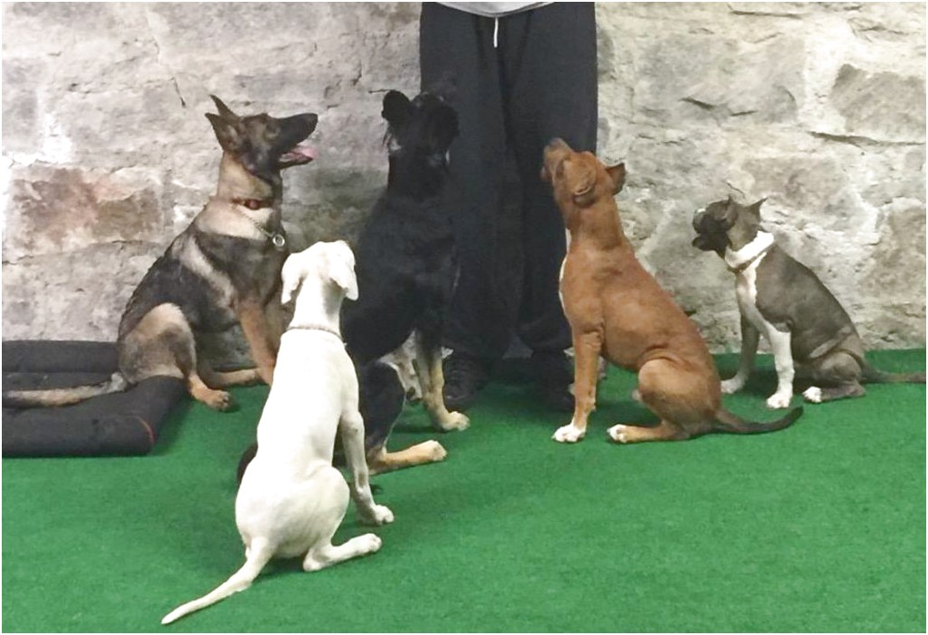 personal protection dog training in georgia