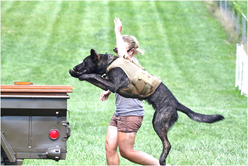 personal protection dog training kentucky