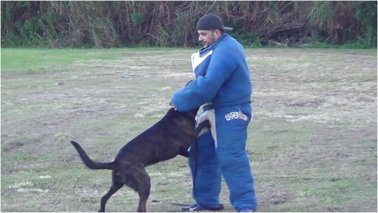 personal protection dog training miami