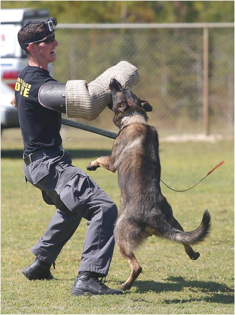personal protection dog training mississippi
