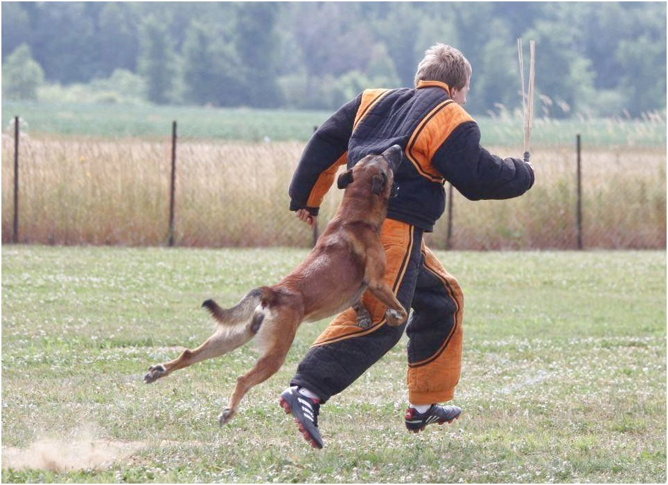 personal protection dog training near me