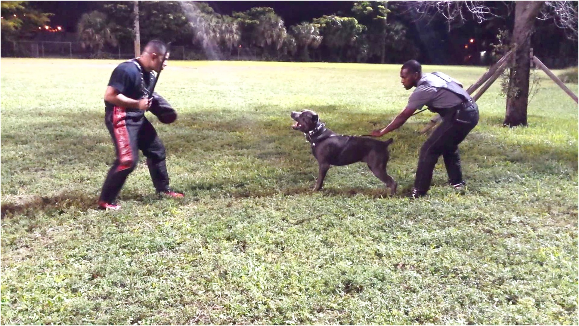 personal protection dog training ohio