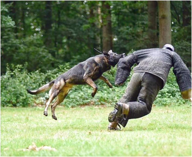 personal protection dog training perth