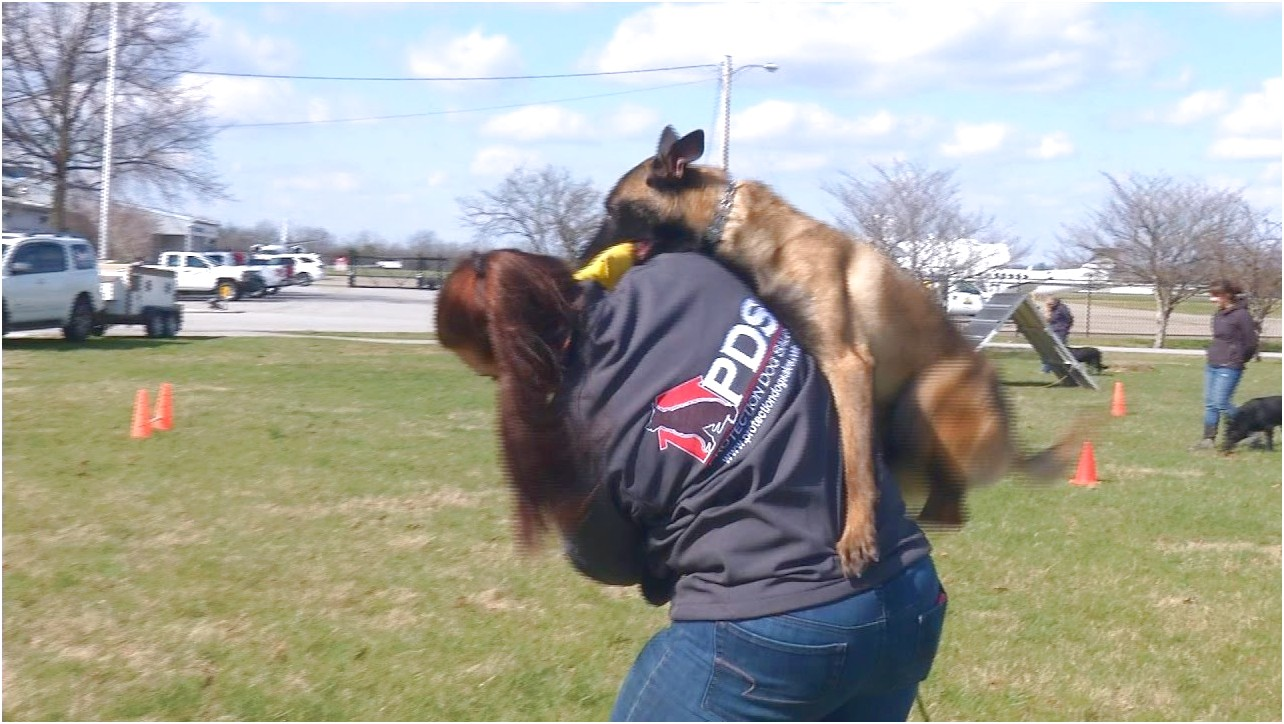 personal protection dog training prices
