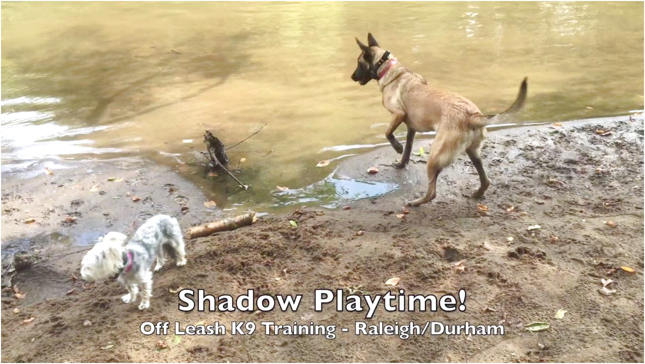 personal protection dog training raleigh nc
