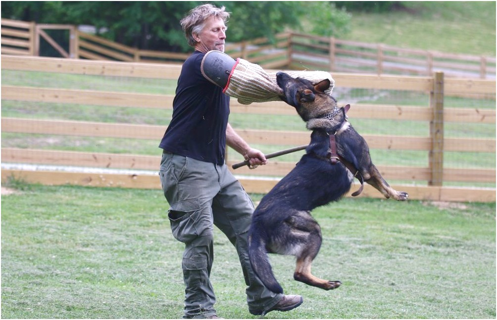 personal protection dog training tennessee